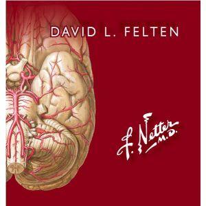 NETTER - FLASHCARDS DE NEUROCIENCIA